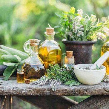 Plantas medicinales I: Própolis y Echinacea