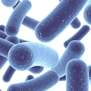 Los beneficios de los probióticos