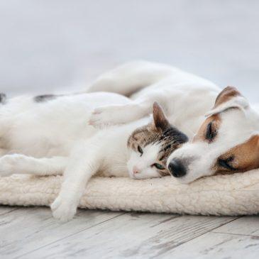Desparasitación de mascotas en verano